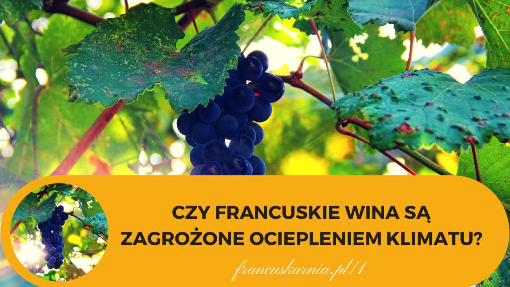 francuskie wina a klimat